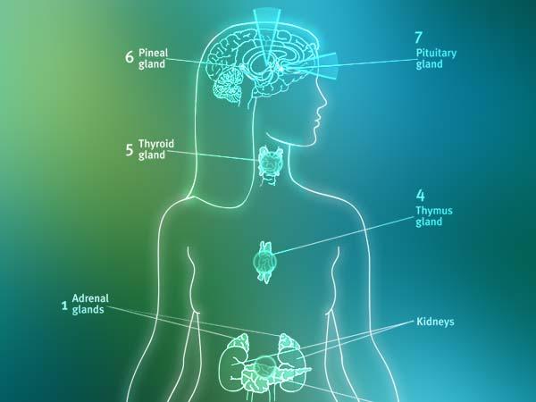 Anatomy & Healing Diagram
