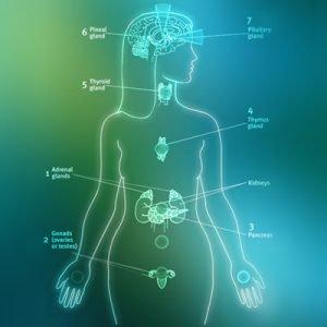 Anatomy & Chakras Figure illustration